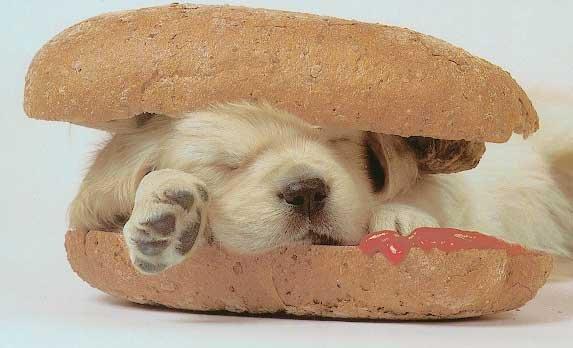 Bild; Quelle: http://www.treichlers.ch/content/schmunzeln/bilder/hotdog.jpg